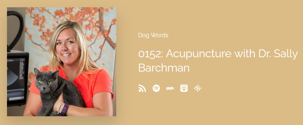 Dr. Sally Barchman Discusses Acupuncture and Other Alternative Treatments For Dogs